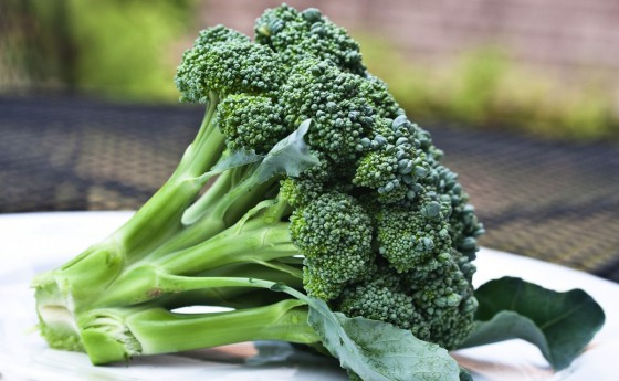 Chemical in broccoli can improve autism symptoms